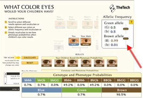 eye color probability pin by rashida c on education