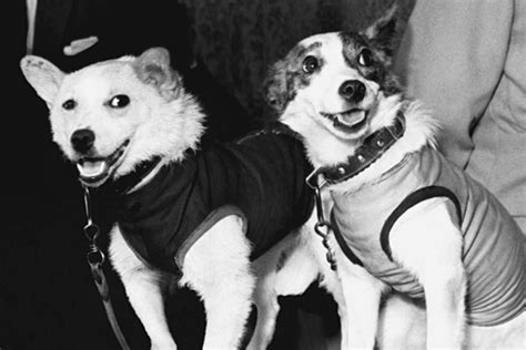 soviet space dogs soviet space dogs honored on 50th anniversary of flight csmonitor