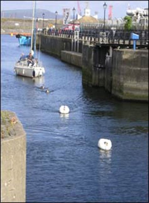 swan boats swansea bbc news in pictures your pictures 5 11 oct