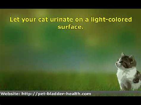 how to tell if has a uti feline lower urinary tract disease flutd vetvid episode 008 funnydog tv