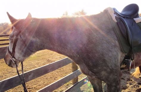 Horse Giveaway - lunging and long lining clinic rider position an equestrian life