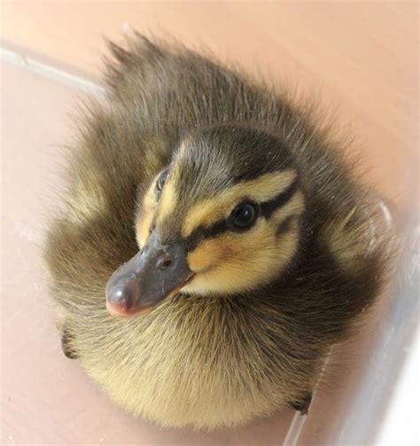 images  nature bird babies  pinterest