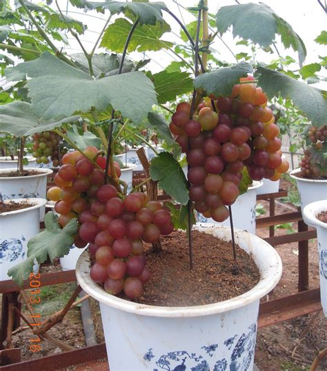 shop for trees tropical fruits trees reviews shopping tropical