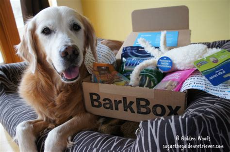 barkbox for puppies gift guide for the always stinky but cuddly potato puppy