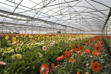 mercato dei fiori terlizzi floricoltura cipriani di cipriani luigi mercato dei