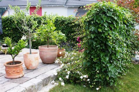 natürlicher sichtschutz im garten 2174 familie harter gartenbau lang gmbh