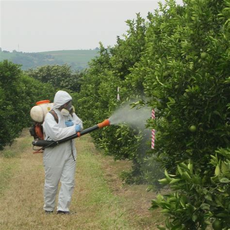 spraying fruit trees bioefficacy gep services syntech research