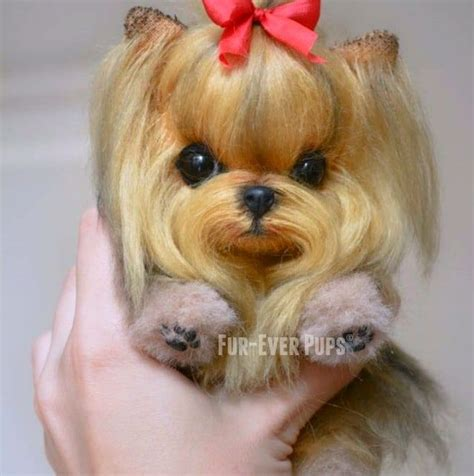 images of teacup dogs 95 best dogs images on teacup dogs for sale