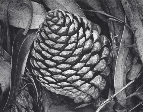 intimate nature: ansel adams and the close view | center