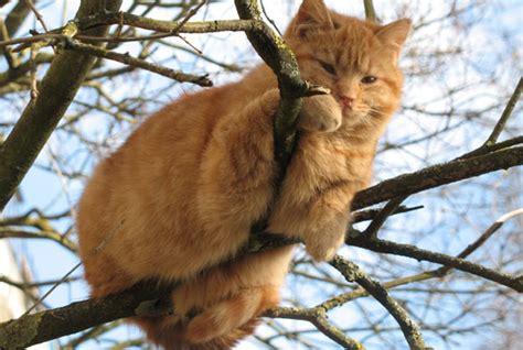 ab wann markieren katzen 220 bergewicht bei katzen geliebte katze magazin