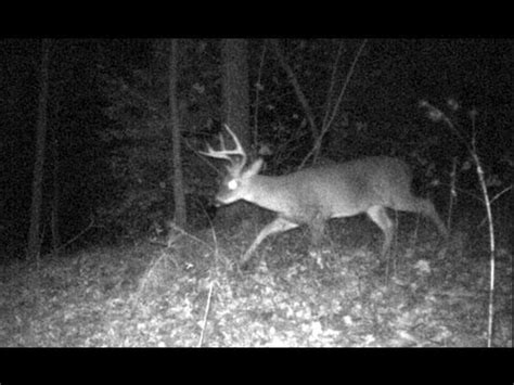 big buck moultrie trail camera. whitetail deer youtube