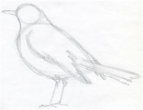 how to draw doodle birds how to draw a bird and what you need to