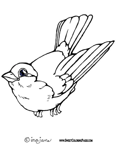coloring book pages bird bird coloring pages coloring pages