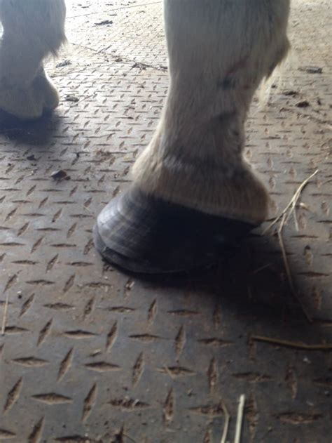best shoes for horseback 17 best images about hoofcare on