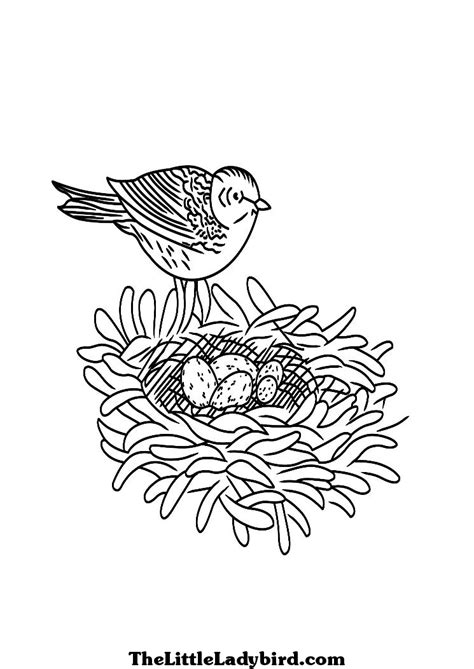 bird nest eggs coloring page coloring page of a bird with nest and eggs coloring