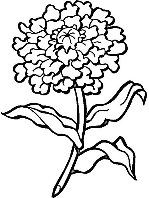 flower coloring pages adultsfree coloring pages for kids