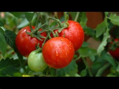 How To Grow An Organic Vegetable Garden Step By Step Diy How To Grow An Organic Vegetable Garden