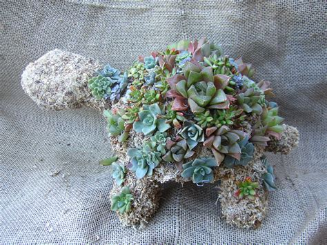 succulent turtle cute office plants popsugar smart living
