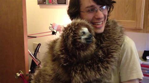 a pet pet sloth memes