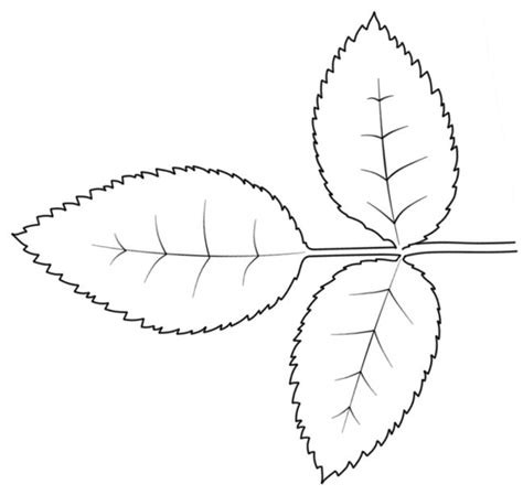 leaf paper template 101 best images about 3 d flower petal patterns on