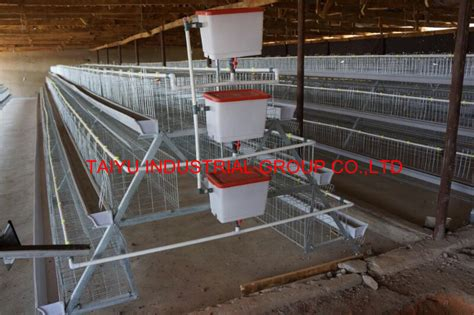 2015 nigeria poultry business plan for layers and broilers taiyu chicken cage for poultry farm for nigeria design