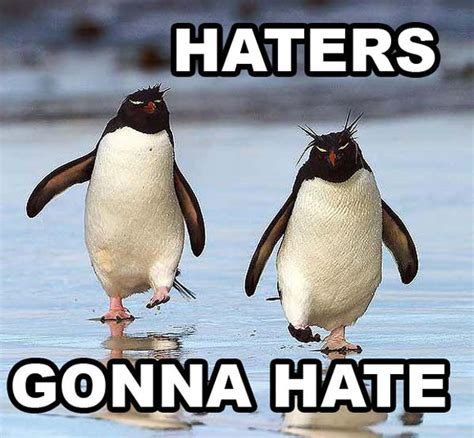 Peguin Meme - haters gonna hate funny penguin memes pics bajiroo com