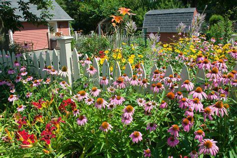 backyard flower garden perennial flower garden in summer backyard plant