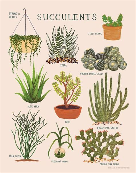 types of garden bushes 444 best images about succulent garden on