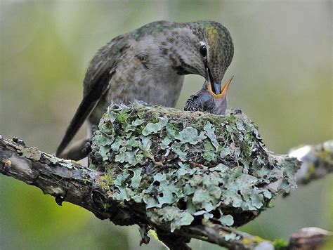 mother s day and parental care birdnote