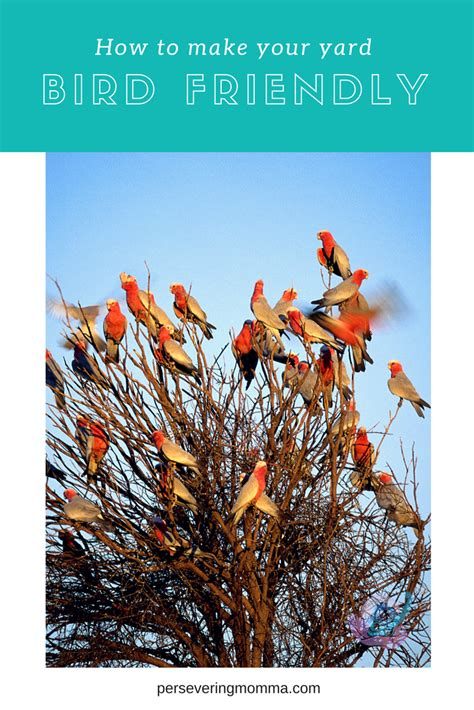 how to your to be a bird how to make your yard a bird friendly habitat