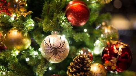 did christmas tree bugs hitch a ride into your house