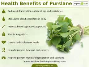top 10 benefits of purslane organic facts