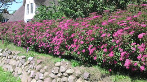 Garten Pflanzen Hecke by Heckenpflanzen Pflanzen F 252 R Ihren Garten