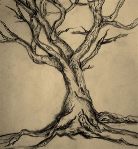 Drawing Trees by Tree Drawing Form 225 K Vonalak Sz 237 Nek
