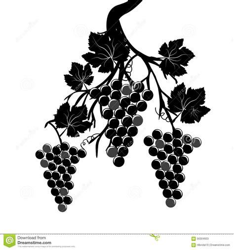 imagenes de uvas vector racimos de la uva en la vid ilustraci 243 n del vector