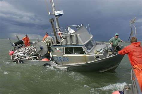 boats for sale in bristol bay alaska 20 best images about fisheyyyy on pinterest