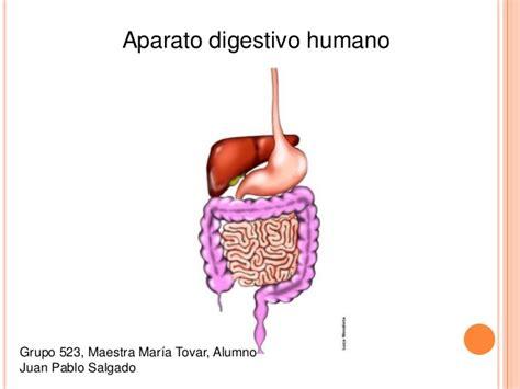 sistema digestivo humano wmv aparato digestivo humano