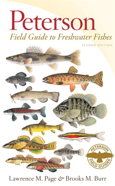fishiq complete seasonal guide to lake fish books houghton mifflin harcourt new today the peterson field guide to freshwater