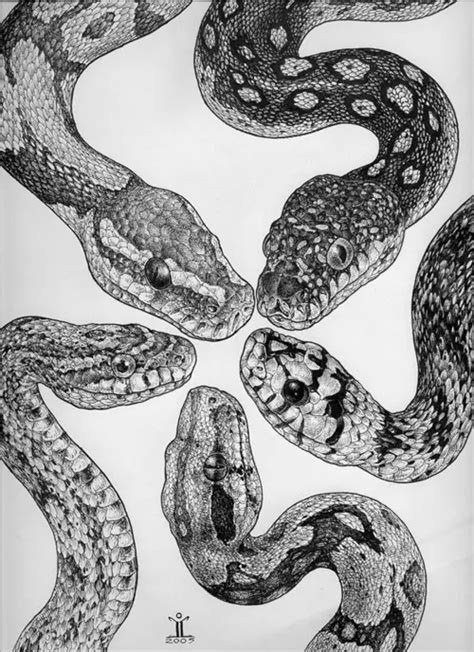 holding pattern tumblr snakes on tumblr