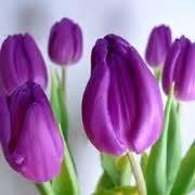 immagini fiori da scaricare immagini floreali giardinaggio immagini fiori
