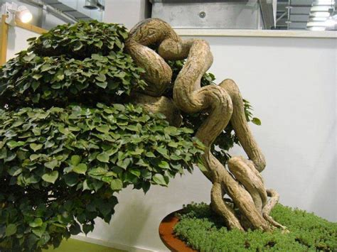 bonsai basics a comprehensive 8 best plants images on succulents exotic plants and gardening