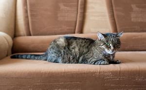 best sofa for cats what is the best sofa fabric for pets ebay