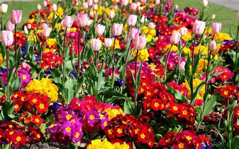 imagenes de rosas full hd flor fondos de pantalla fondos de escritorio 2560x1600