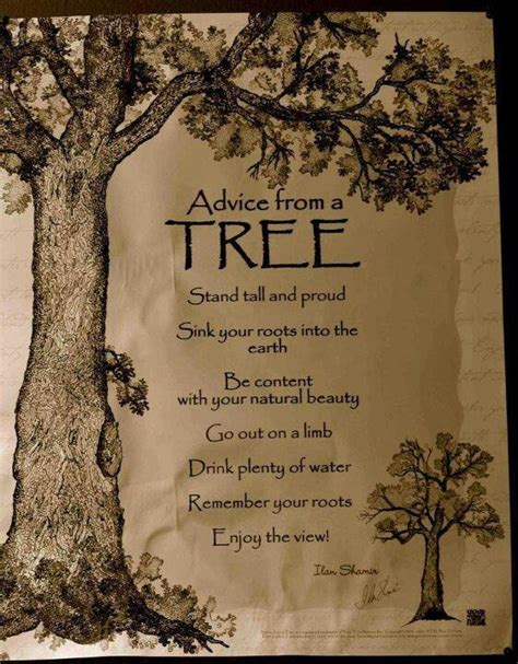the tree limb books advice from a tree stand and proud sink your roots