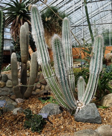 botanical gardens michigan botanical gardens in michigan panoramio photo of