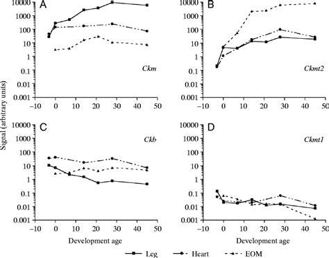 m line creatine kinase postnatal suppression of myomesin creatine kinase