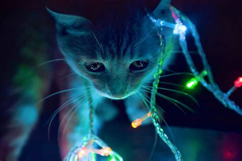 lights cat 3d animated cat in winter lights hd background