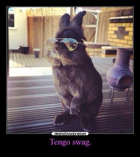 imagenes hipster gatos im 225 genes y carteles de hipster pag 13 desmotivaciones
