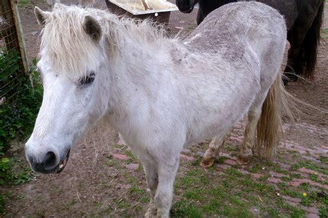 pferde suchen ein neues zuhause vier pferde suchen ein zuhause bunte kuh e v leer