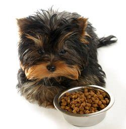 best puppy food at walmart choosing the best puppy food you can buy